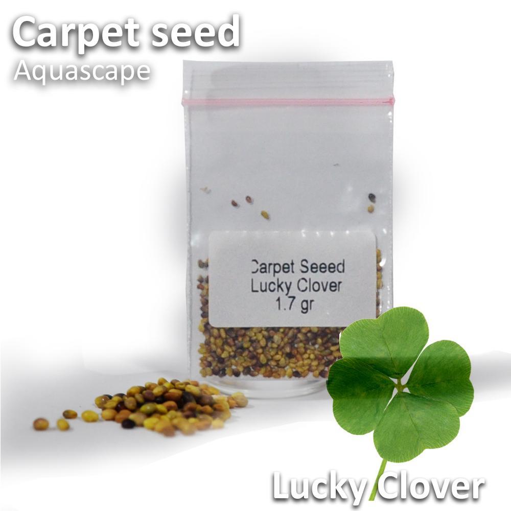 Jirifarm Bibit Benih Carpet Karpet Seed Lucky Lover 1.7gr Aquascape