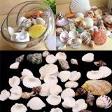 100G Pantai Campuran Kerang Laut Kerang Shell Kerajinan Kerang Aquarium Dekorasi Acak Intl Diskon Tiongkok