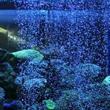 Model Akuarium Batu Udara Gelembung Dinding Fish Tank Bar Meningkatkan Oksigen Plastik Batu Internasional Terbaru