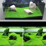 Jual Beli Ikan Aquarium Tank Mini Double Daun Terjemahan Latar Depan Karpet Air Tanaman Benih Rumput Dekorasi Pemandangan Ornamen
