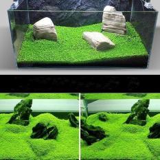 Beli Ikan Aquarium Tank Mini Double Daun Terjemahan Latar Depan Karpet Air Tanaman Benih Rumput Dekorasi Pemandangan Ornamen Murah
