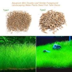 【Inventaris nyata】Aquarium Benih Tanaman Aquatic Rumput Air Hiasan Seperti Tangki Ikan Ikan Latar Depan Tanaman Spesifikasi #1 - intl