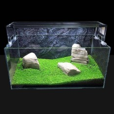 Bibit Tumbuhan Akuarium Rumput Air Akuatik Biji Tanaman Indoor Tanaman Hias-Intl