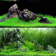 Tanaman Air Penanaman Bibit Hias Tanaman Air Biji Dekorasi Akuarium-Internasional