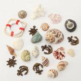 Obral Campuran Tangki Ikan Laut Shell Dekorasi Akuarium Kerajinan Alami Seashells Beach Internasional Murah