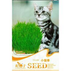 Cat Grass Seeds / Bibit Rumput makanan Kucing - 200 biji