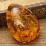 Harga Serangga Inklusi Kalajengking Batu Amber Baltik Liontin Kalung 6 1 Cm X 4 32 Cm X 1 52 Cm Internasional Baru