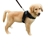 Tali Anjing Peliharaan Rompi Pengaman Yang Ditetapkan Disesuaikan Nilon Tali Tuntun Anjing Kerah For Pelatihan Berjalan Berlari Menolong Tanpa Tarik Baju Zirah For Were A Medium Anjing Kecil Hitam M Internasional Diskon Tiongkok