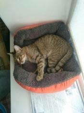 Musim Semi dan Musim Gugur Warm Nest Kennel Pet Dog Bed Pemanasan Rumah Anjing Bahan Lembut PET Nest Permen Berwarna Anjing untuk Cat Puppy 5 Warna (Orange) L-Intl
