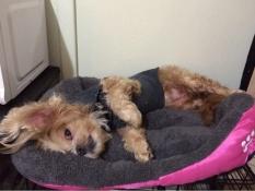 Musim Semi dan Musim Gugur Warm Nest Kennel Pet Dog Bed Pemanasan Rumah Anjing Bahan Lembut PET Nest Permen Berwarna Anjing untuk Cat Puppy 5 Warna (Merah) M-Intl