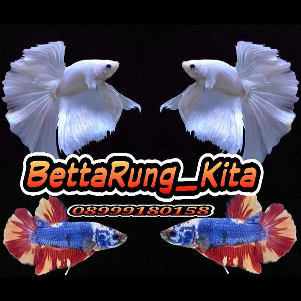 Ikan Cupang Hias Murah Bluerim Membeli Jualan Online Akuarium Dengan Harga Murah Lazada Indonesia