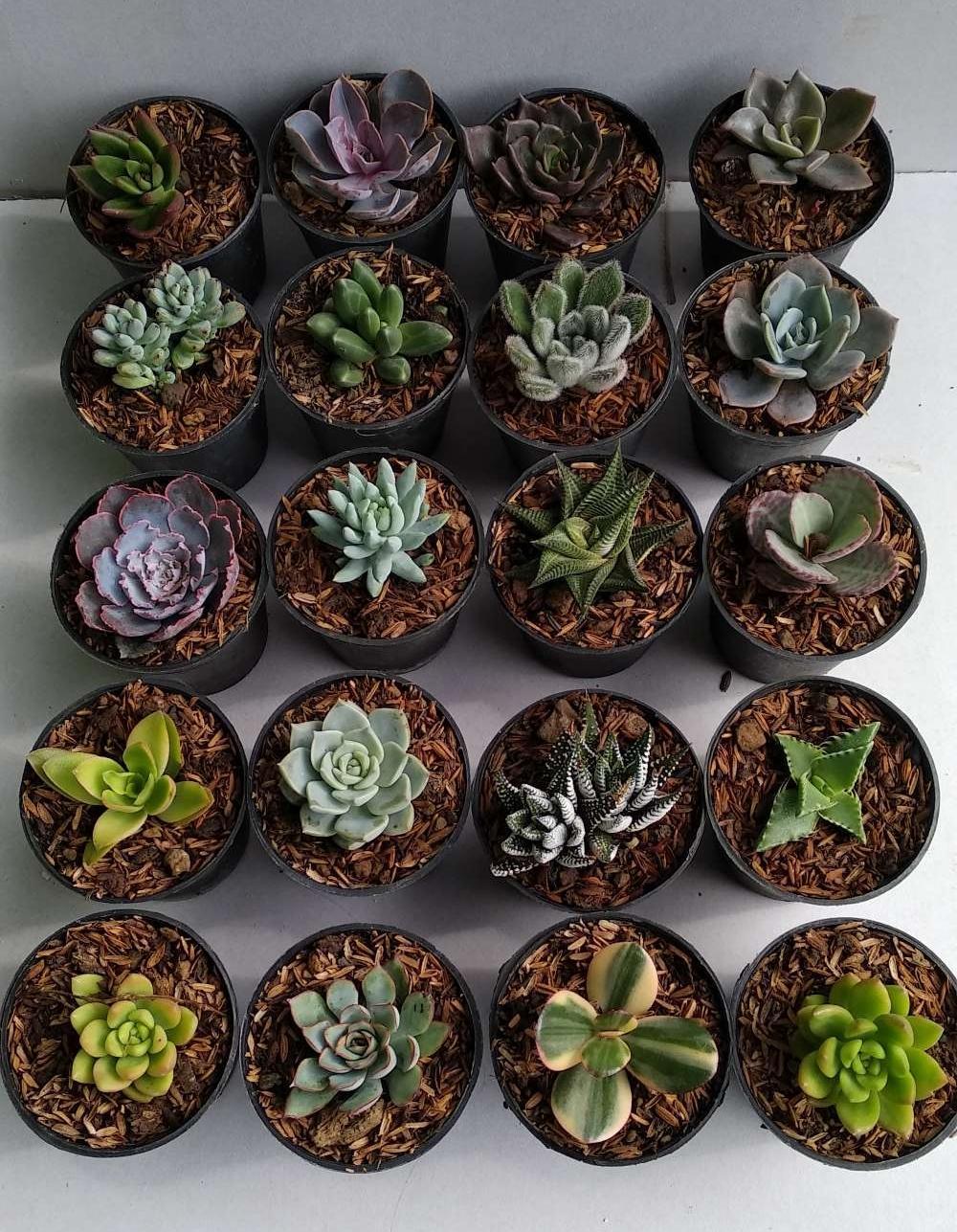paket tanaman kaktus sukulen 20 plus pot b5b8b1b3f9