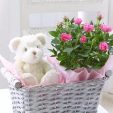 Bibit Tanaman Mawar Barbie Barbie Or Baby Roses Murah