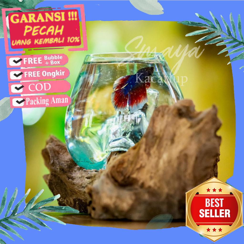 Aquarium Kecil Mini Bulat Ikan Cupang Dan Ikan Hias Aquascape Kayu Akuarium Mini Bulat Cupang Ikan Hias Aquascape Kayu Aquarium Kaca Akrilik Unik Lucu Murah Lazada Indonesia