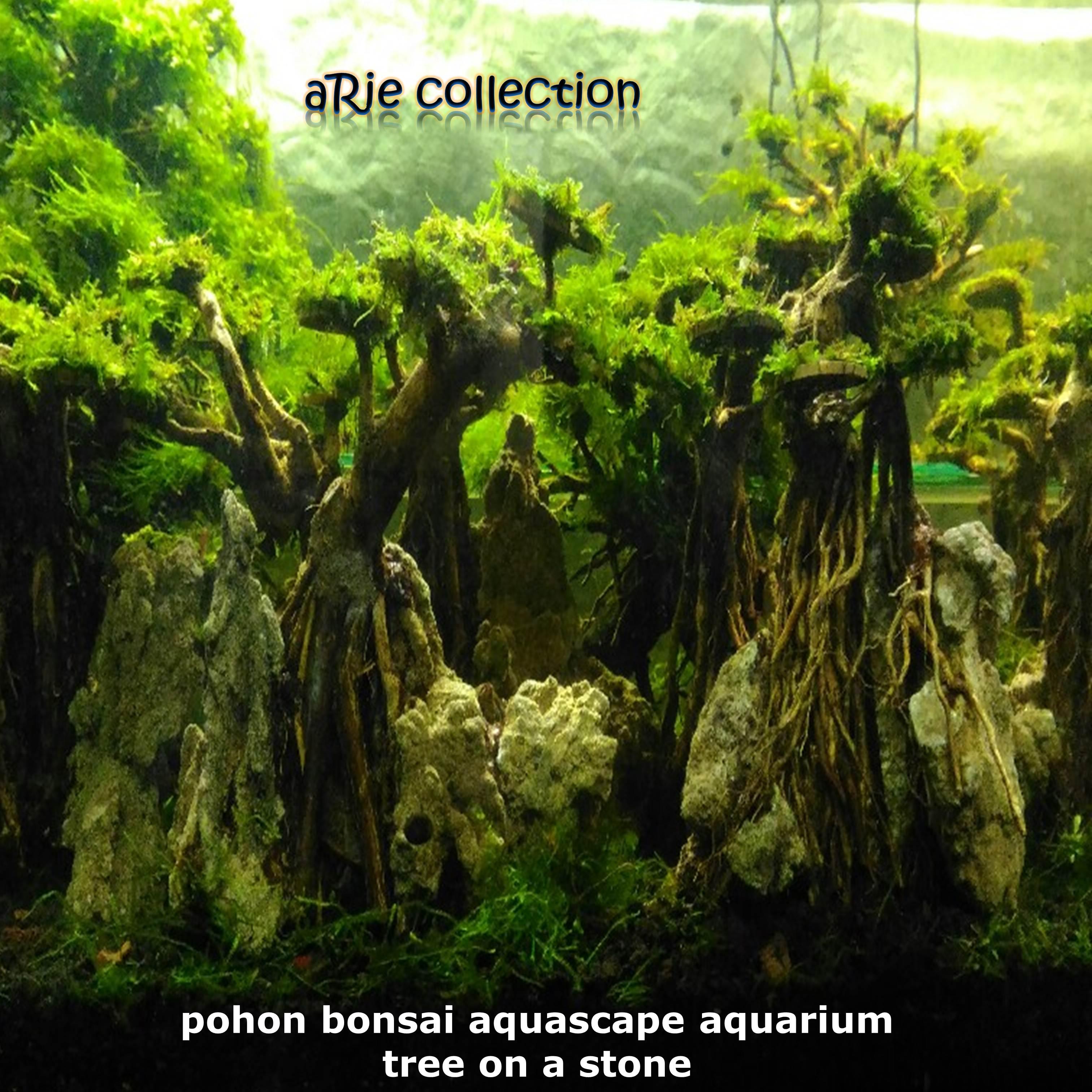 Pohon Bonsai Aquascape Aquarium Tree On A Stone Lazada Indonesia