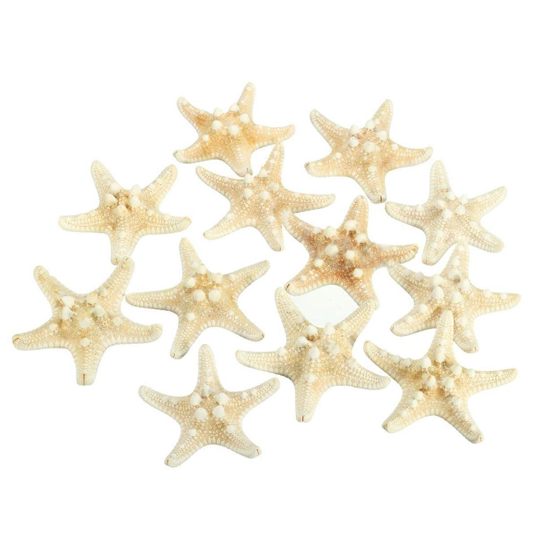 12 X White Knobby Starfish 5cm -7cm Sea Star Shell Beach Wedding Display Craft Decor By Ertic.