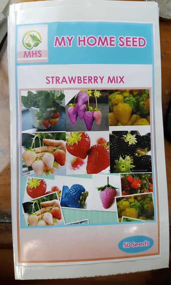 PROMO benih / bibit strawberry mix (MHS) - eDlsnNHp