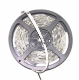Jual Led Star Diesel Lampu Led 3528 5M 12V Pp Led Branded