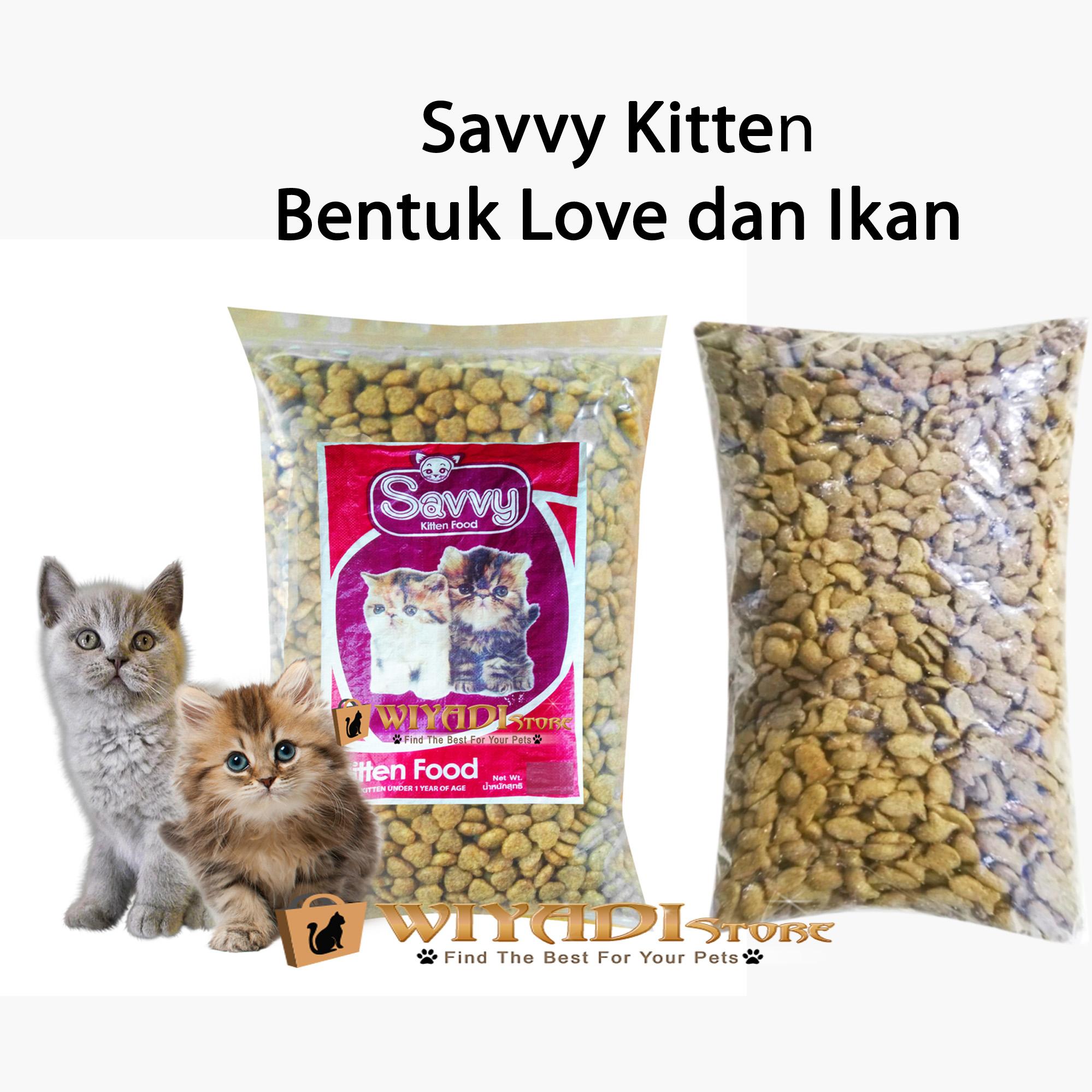 Makanan Anak Kucing Persia Anggora Kampung Dan Sebagainya Kitten